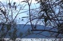 Τριχωνίδα, παραλίμνια τοποθεσία Φωτμός Πετροχωρίου